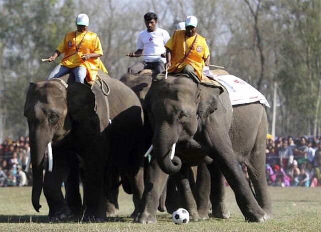 Chitwan Elephant Festival