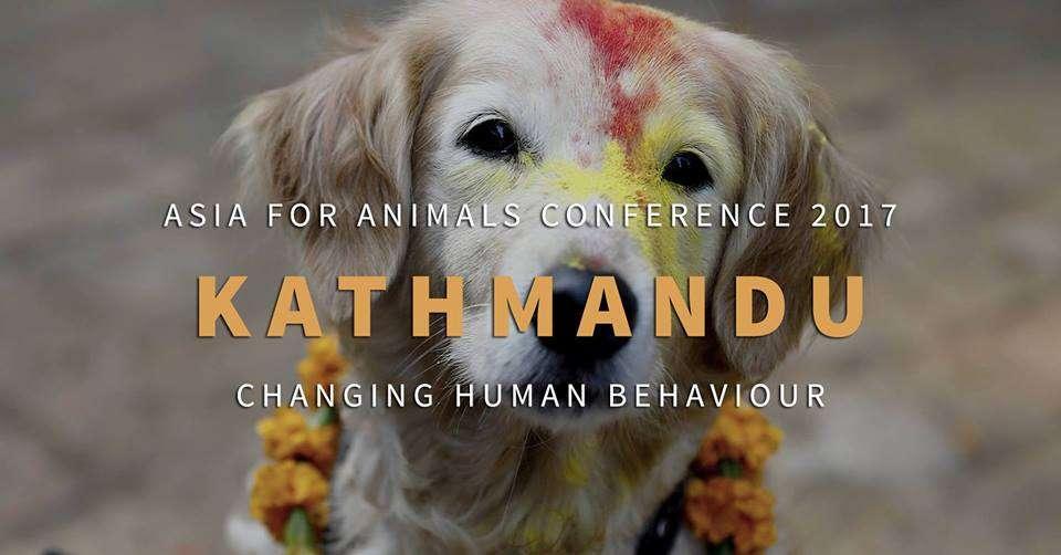 Asia for Animals Kathmandu
