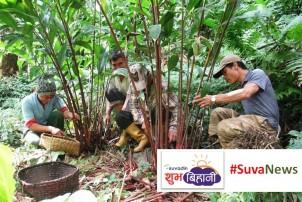 किसानकाे पाैरखः गाउँमै वार्षिक १० लाख अाम्दानी